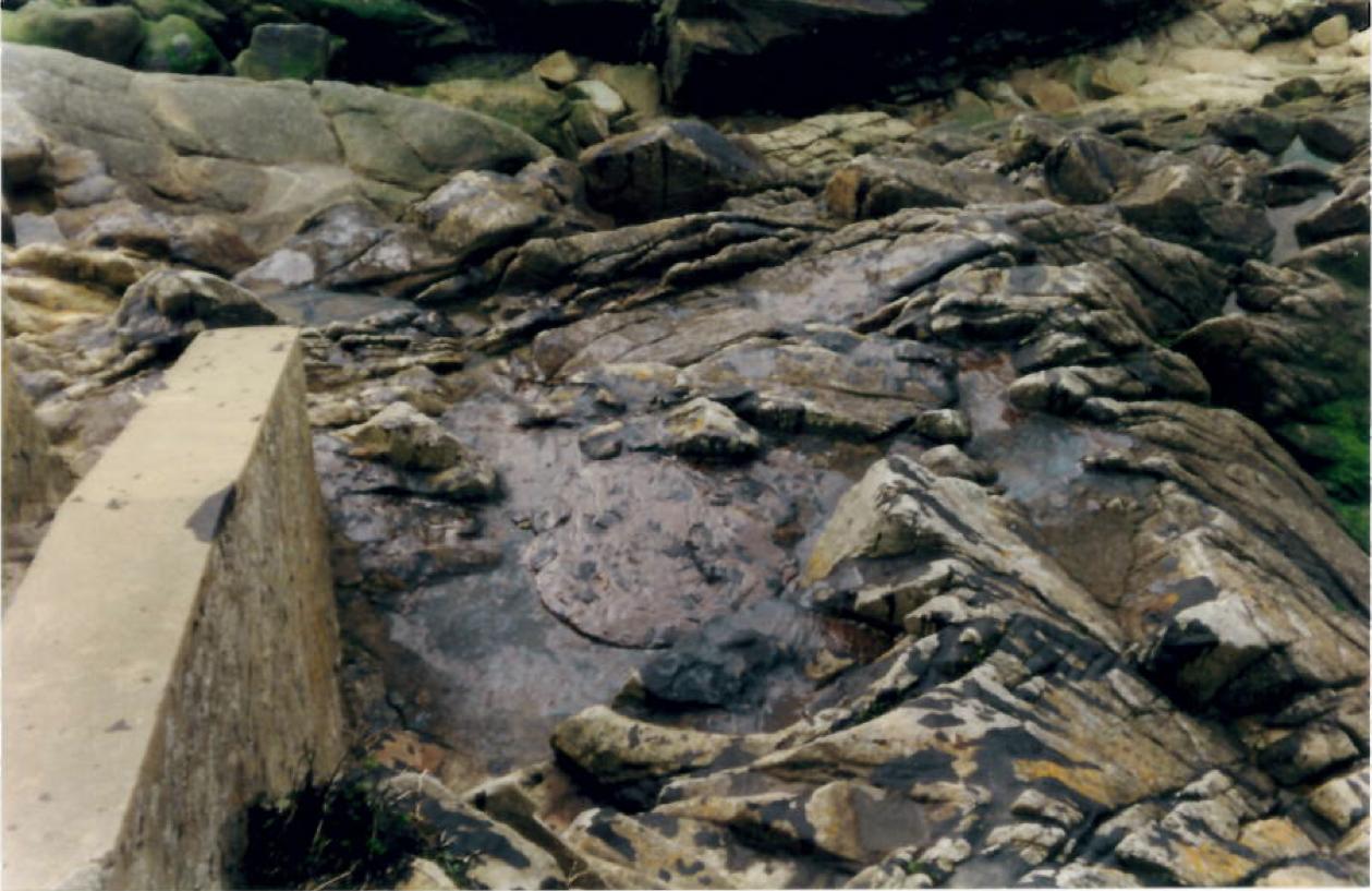 Les marées noires : nos explications sur le phénomène