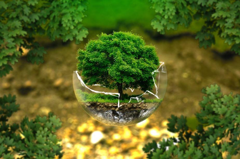 Écosystème d'un arbre